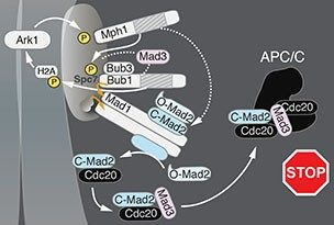 Lipid-binding Events in the Wnt Signaling Pathway